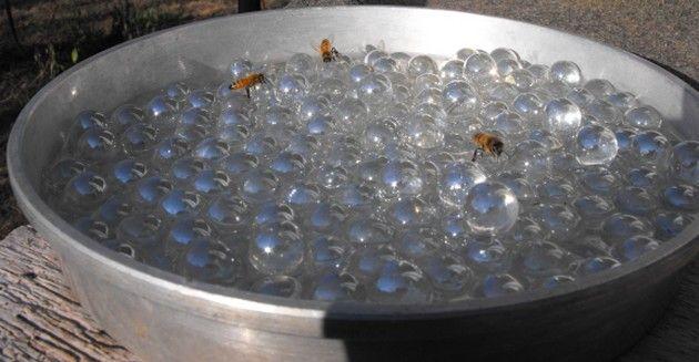 Faites+un+abreuvoir+pour+les+abeilles+et+aidez++à+protéger+et+hydrater+les+pollinisateurs+