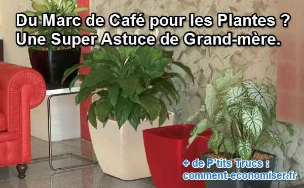 Du Marc de Café pour les Plantes ? Une Super Astuce de Grand-mère.