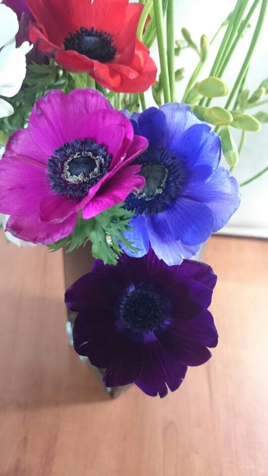 Anemones....so simple and pretty
