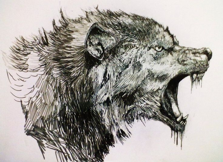 Wolf by Zombiraptor.deviantart.com on @DeviantArt