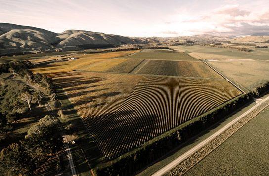 Craggy Range - Te Muna Road Vineyard