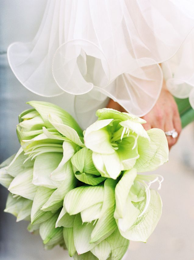 ♡Green and White bouquets are becoming more in fashion; be careful your florist doesn't dye white flowers but rather uses flowers that are actually of a green variety. Dye doesn't withstand well and if not done right can come out onto clothing and stain.