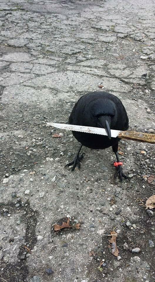Wrong neighborhood motherfucker>>> Chainsaw have you been stealing Ronan's stuff again?