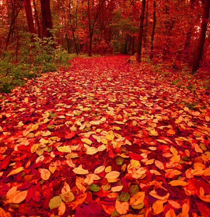 Autumn Forest Path, Finland photo . Those colors are amazing !!!