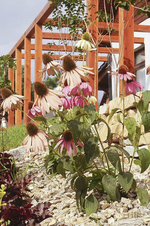 garden design, aranżacja ogrodu i domu - Januszówka