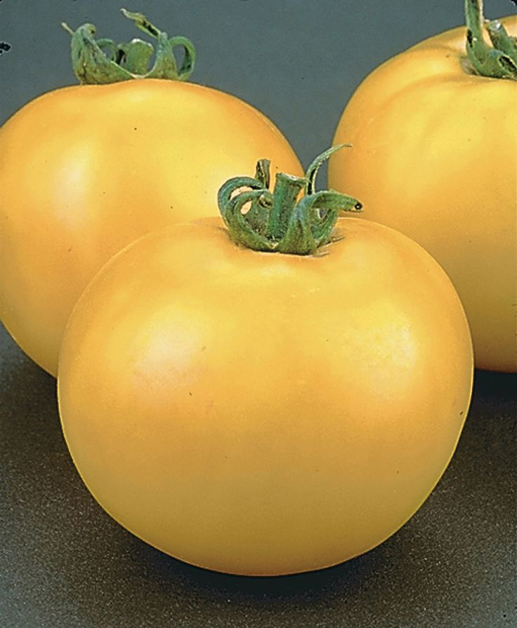 Tried & True Tomato Lemon Boy: these eye-catching lemon-yellow tomatoes are meaty and flavourful. 6-oz slicer
