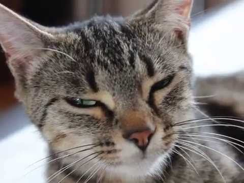 Cats with funny noise