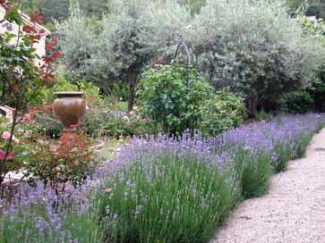 Lavender thrives in drought and poor soil; humidity and wet feet are its nemeses. If you live in a humid climate or have poor-draining soil, consider growing Spanish lavender or French lavender (L. dentata).