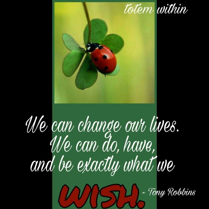 Ladybug Quote   Totem Within