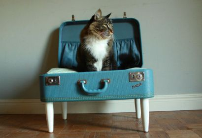 are you kidding?! that's adorable. recycled suitcase turned into a kitty bed.