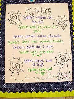 Spider Week!
