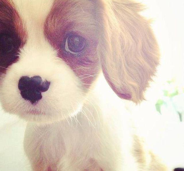 so much cuteness....