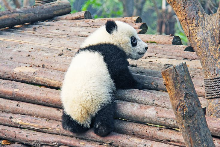 The best things to see in China - las mejores cosas que ver en China