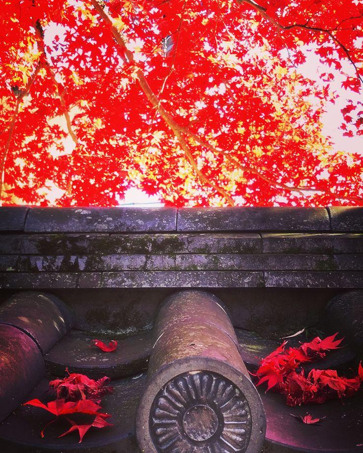 去年の紅葉🍁 #紅葉 #修善寺 #紅葉狩り #秋 #赤 #日本 #autumn🍁 #autumncolors #autumleaves #japantravel #shuzenji