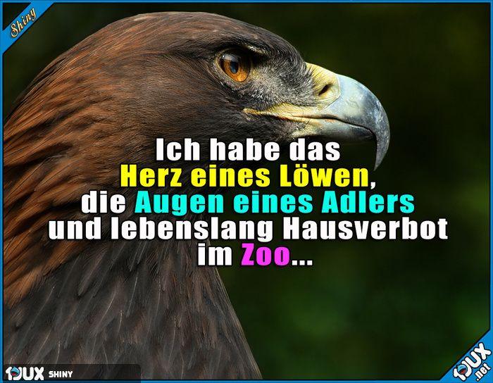 Manches sollte man nicht zu wörtlich nehmen :P Lustige Sprüche #Humor #Sprüche #nurSpaß #Adler #Löwe #Zoo #Witz #lustigeSprüche #BilddesTages