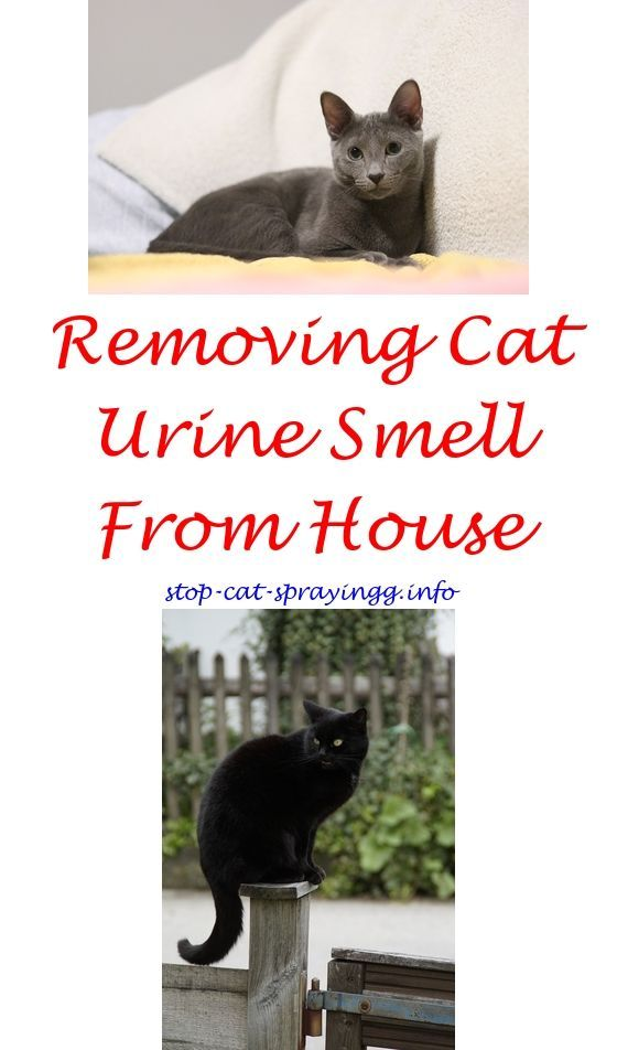 clean cat spray sprays for keeping cats out of christmas trees ...