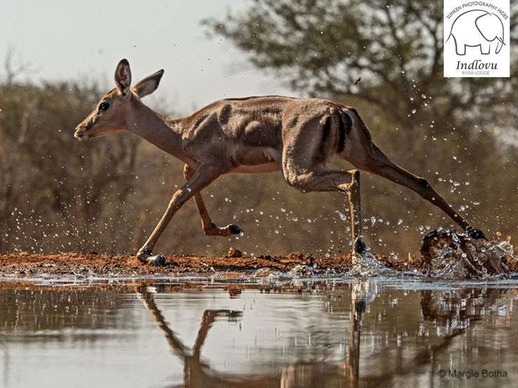 SPECIAL OFFER! Enjoy a 4 night photography package at 10% off.   This offer includes accommodation, all meals, 2 game activities per day and an excursion to Hoedspruit Endangered Species Centre to photograph African Wild Dogs.   View more details here: http://ow.ly/8UpW307Cycs