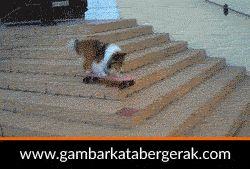 Gambar animasi binatang lucu bergerak, anjing main skateboard :D