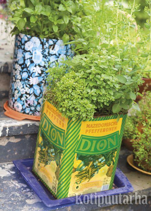 Keittiötarhan voi perustaa pienimuotoisesti vaikka sisääntulon aurinkoisille rappusille, jossa yrtit kasvavat ruukuissa. www.kotipuutarha.fi