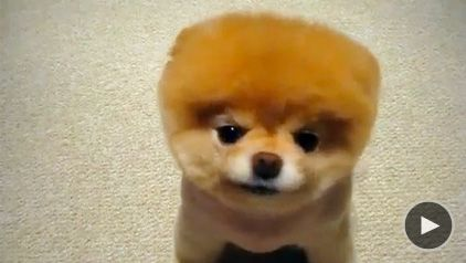 Cute Dog On   Pet Meds Commercial