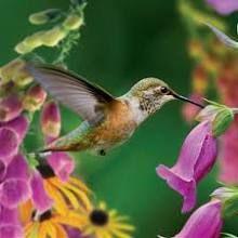 Look at the cute hummingbird  =)