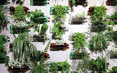 1000 images about garten pflanzen on pinterest. Black Bedroom Furniture Sets. Home Design Ideas