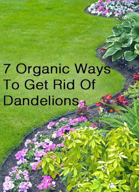 Natural Ways To Get Rid Of Perennials 21