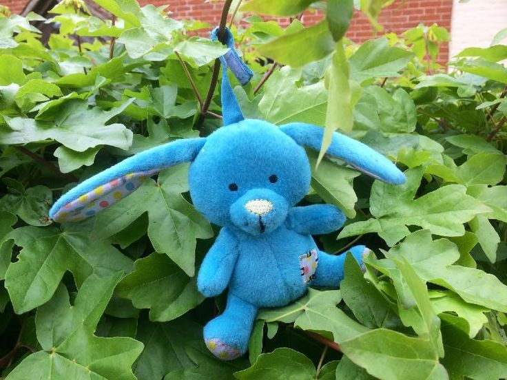 Found on 21 May. 2016 @ On B1146 Dereham-Fakenham rd @East Bilney Norfolk UK. A small friendly looking blue rabbit was found in the road in the middle of the village. May have been dropped from a pocket, pram, moving car or small hand. Would like to reunite him with his owner. Visit: https://whiteboomerang.com/lostteddy/msg/lemg6d (Posted by Jayne on 22 May. 2016)