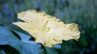 Photofusionvirtual: Flor de esponja vegetal wallpapers HD