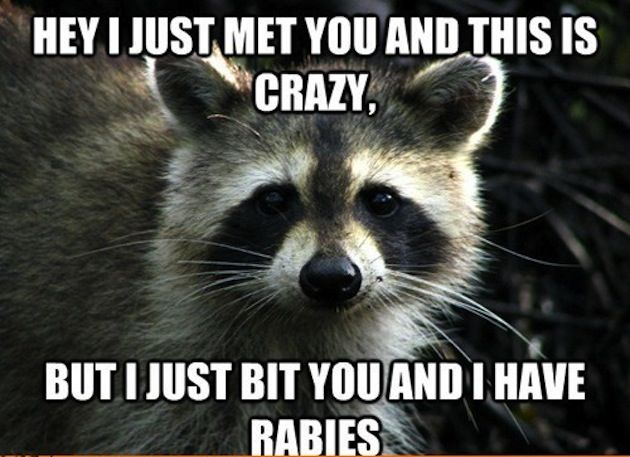 animal+memes | the 50 best cute and funny animal memes copyright 50