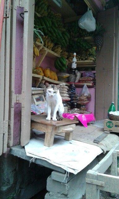 Shopkeeper