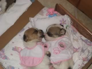 cute puppies in baby clothes photo puppies   puppies
