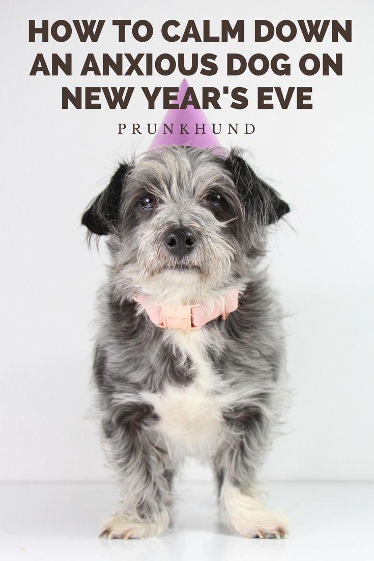96 besten Mein Hund Bilder auf Pinterest | Hund zubehör, Hunde und ...