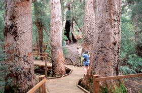 Tree top walkway at Valley of the Giants (Walpole-Nornalup National Park and Walpole Wilderness Area)
