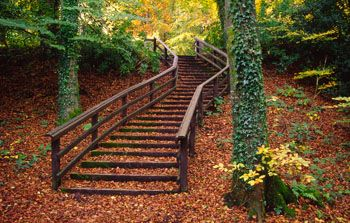 Autumn Stairway, Castle Caldwell Forest Park, Co. Fermanagh, in Northern Ireland