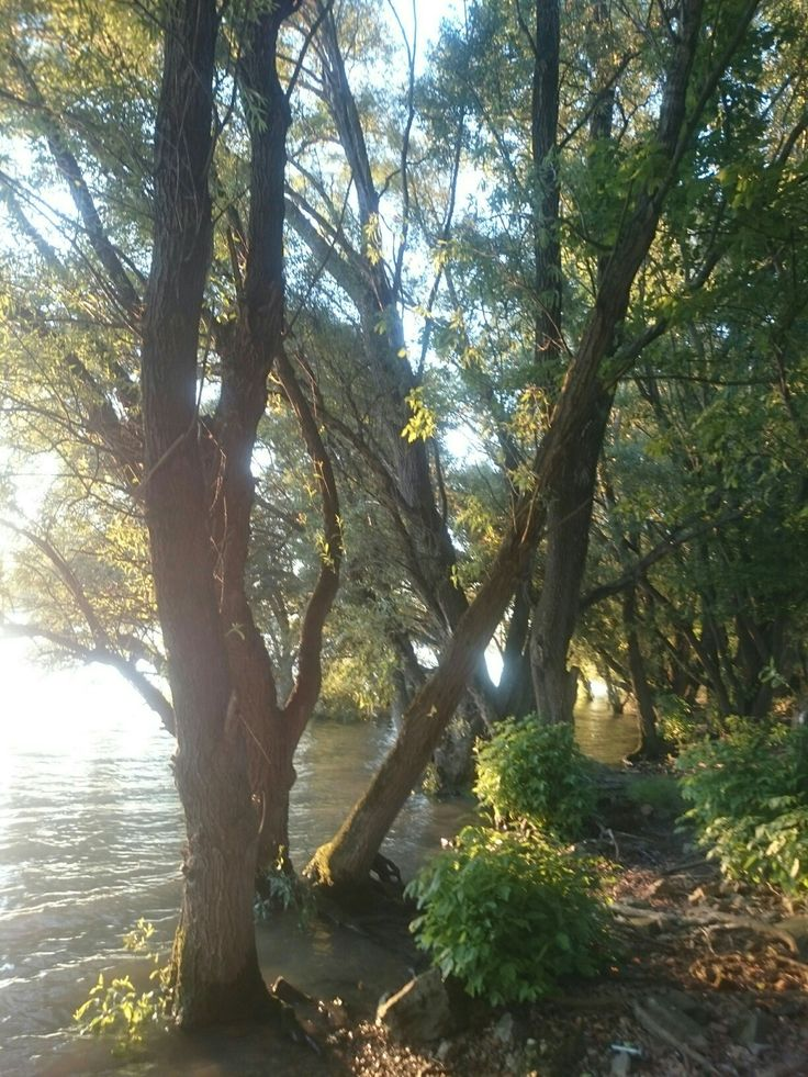 Vác, Duna-part