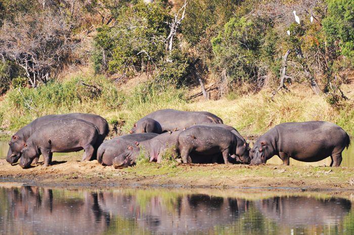 #MongenaPrivateGameReserve #Hippo #Wildlife #Nature