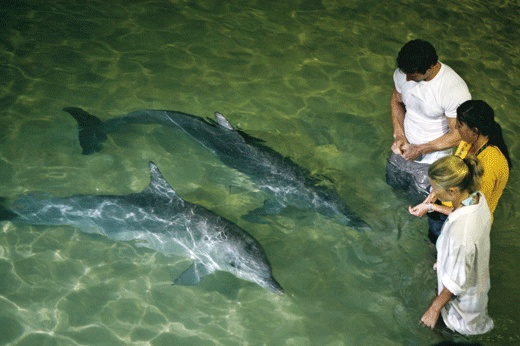 Moreton Island, Brisbane - Where we got up close and personal with the local dolphins need to go again.