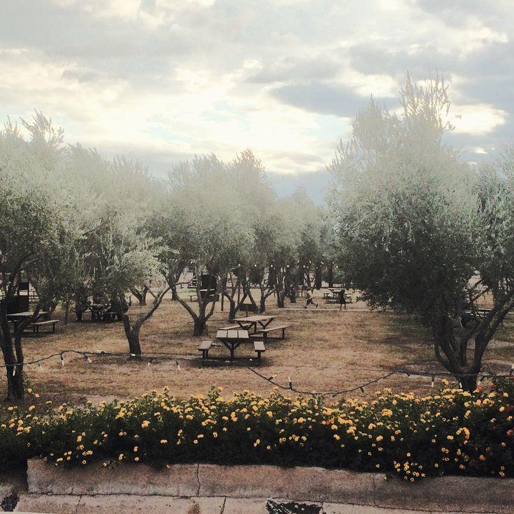 Phoenix Hot Spots: Queen Creek Olive Mill
