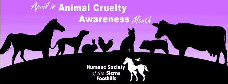 how to raise awareness for animal cruelty