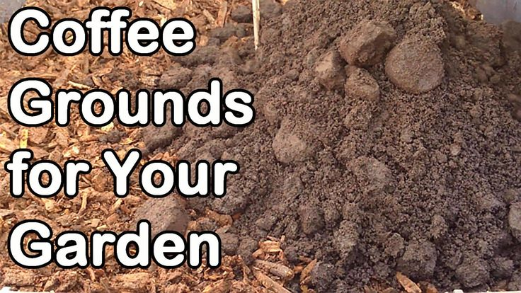 Coffee grounds how why we use them in our garden video for How to use coffee grounds in garden