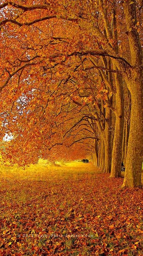 Something I love about Fall: Canopies of gold and red and orange