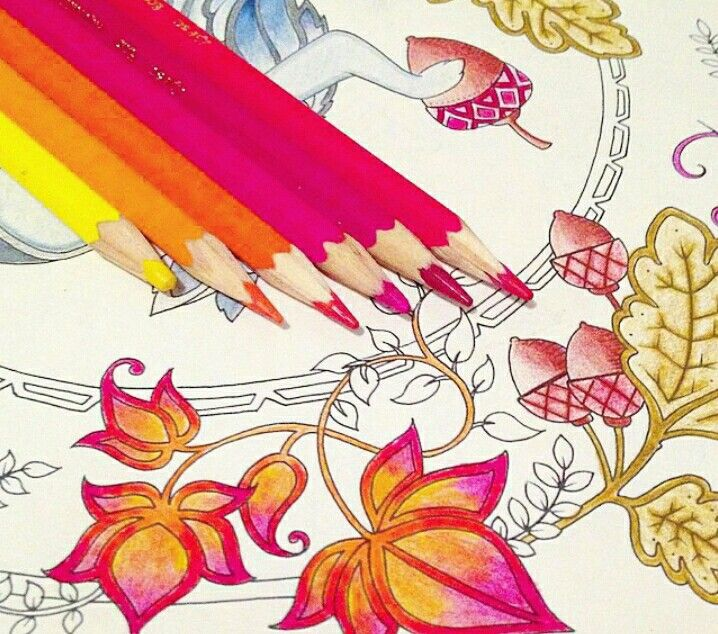 Jardim Secreto Floresta Encantada Color Pencil ArtAdult