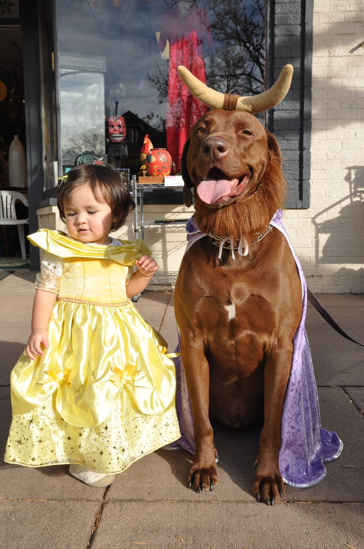 Beauty And The Beast Costume Pet Halloween Costume Ideas