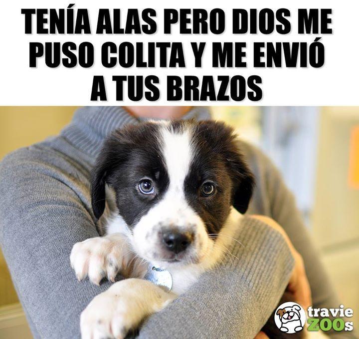 Cuidame Mucho Por Favor Aunque Soy Un Angelito Necesito De Ti Memes Perros Perros Frases Animales Frases