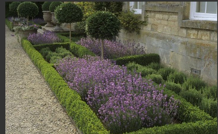 Box hedge & lavender planting