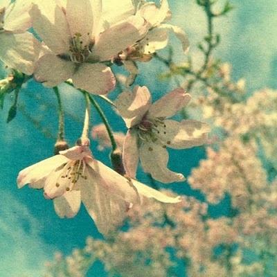 Dreamin': White Flower, Spring Flower, Dreams, Blue, Color Pallets, Bold Color, New Life, Soft Color, Blossoms