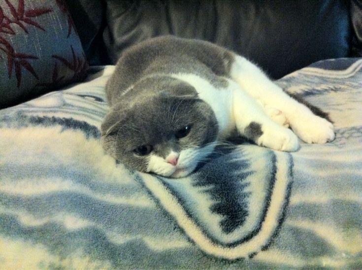 Sad kitty last night.