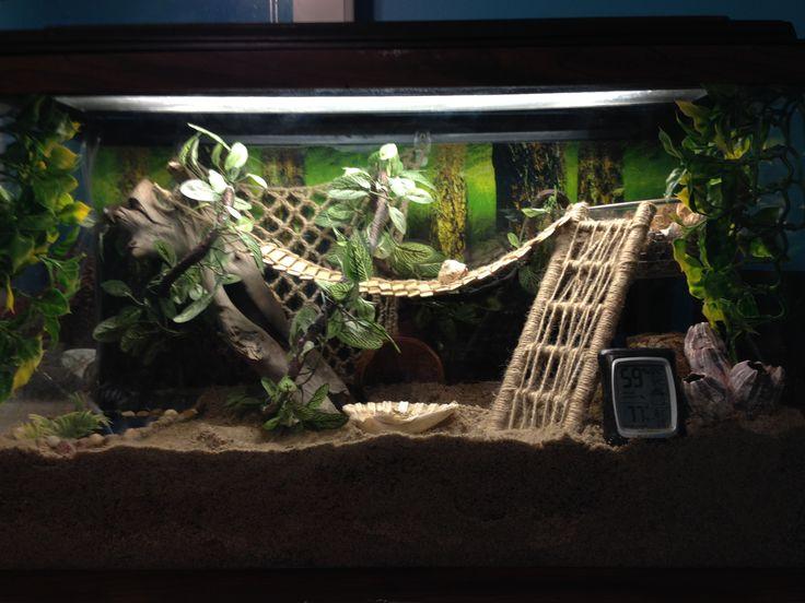 Hermit crab tank                                                                                                                                                                                 More
