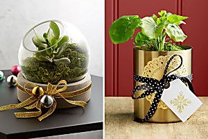 Personalised Christmas gifts for garden lovers!